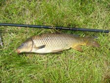 Common carp with Nissin Flying Dragon carp rod.