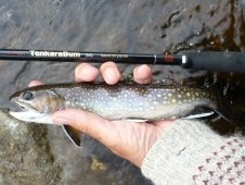TenkaraBum 36 and brook trout.