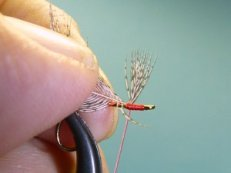 End of feather tied to hook behind eye.