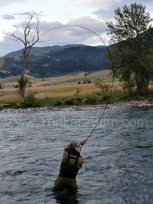 Tenkara angler in Gallatin River (MT) with tenkara rod bent in a 'C' from large fish.