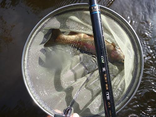 Suntech TB63, net and rainbow trout