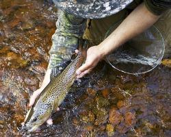 trout caught on partridge and orange sakasa kebari
