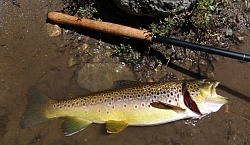 Bill H's Utah Kille Bug Brown
