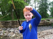 bluegill sunfish - t-goat