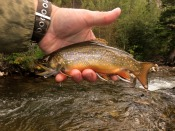 brook trout - JTimblin