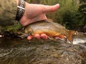 brook trout - JTimblin