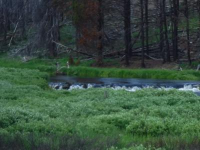 Bear Creek Beaver Pond