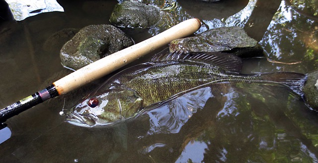 Daiwa LT H44 and Smallmouth Bass