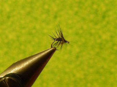 Stewart Black Spider