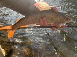 Angler holding backlit grayling