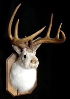 Jackalope head mount