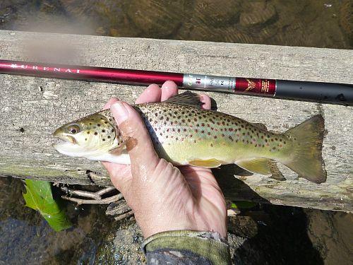 Angler holding brown trout and Suntech Kurenai HM54R