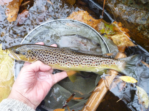 Fourteen inch trout, best of the day