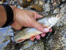 Angler holding brook trout