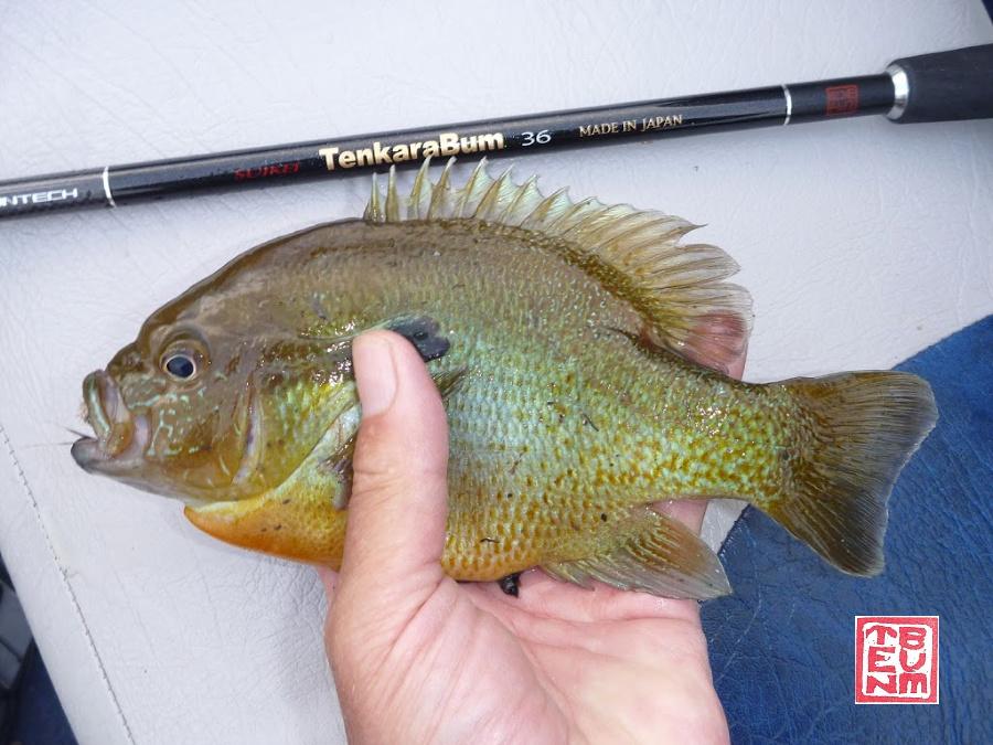 TenkaraBum 36 tenkara rod and redbreast sunfish on boat seat