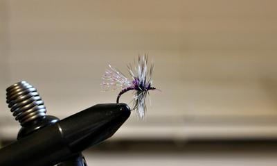 Purple Reaper Midge