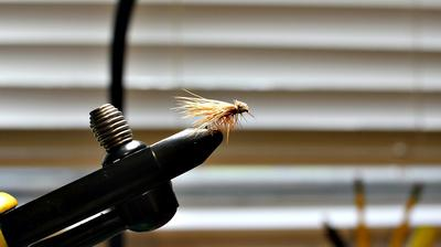The Elk Hair Caddis is a proven dry fly.
