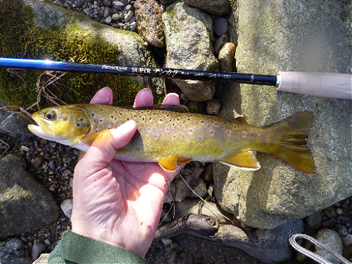 Angler holding brown trout alongside Nissin Pro Square 6:4 360