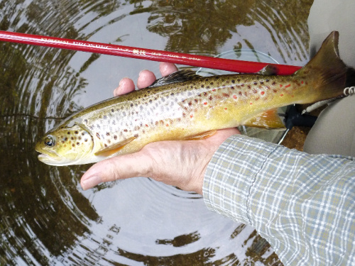 Angler holding 13