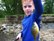 pumpkinseed-sunfish-t-goat