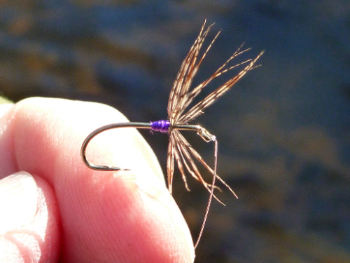 Angler holding fly with short purple silk body and fairly sparse hackle.