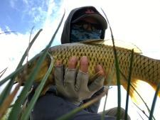 Angler holding small carp