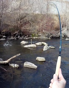 Angler holding Royal Stage Tenkara rod                                                                        bent by a fish on the line