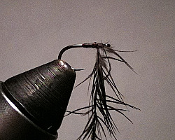 Wrap the starling feather around the tying thread (shown hanging straight down from the hook shank)