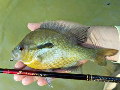 Boss Sunfish, Nissin Zerosum, and Stewart's Black Spider