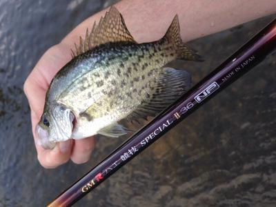 Crappie on the killer bugger fly