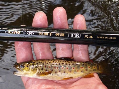 Angler holding small brown trout and Suntech GM TB54
