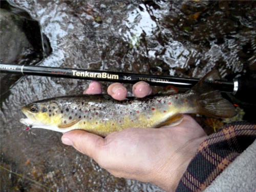 TenkaraBum 36 with small brown trout