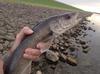 First Walleye