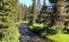 Feeder Creek