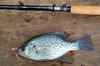 Crappie with marabou leech