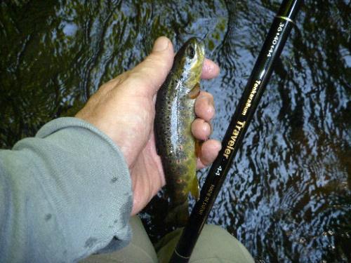 TenkaraBum Traveler 44 and small trout