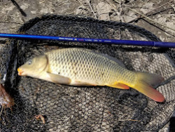 Carp caught with FM Suguru Long