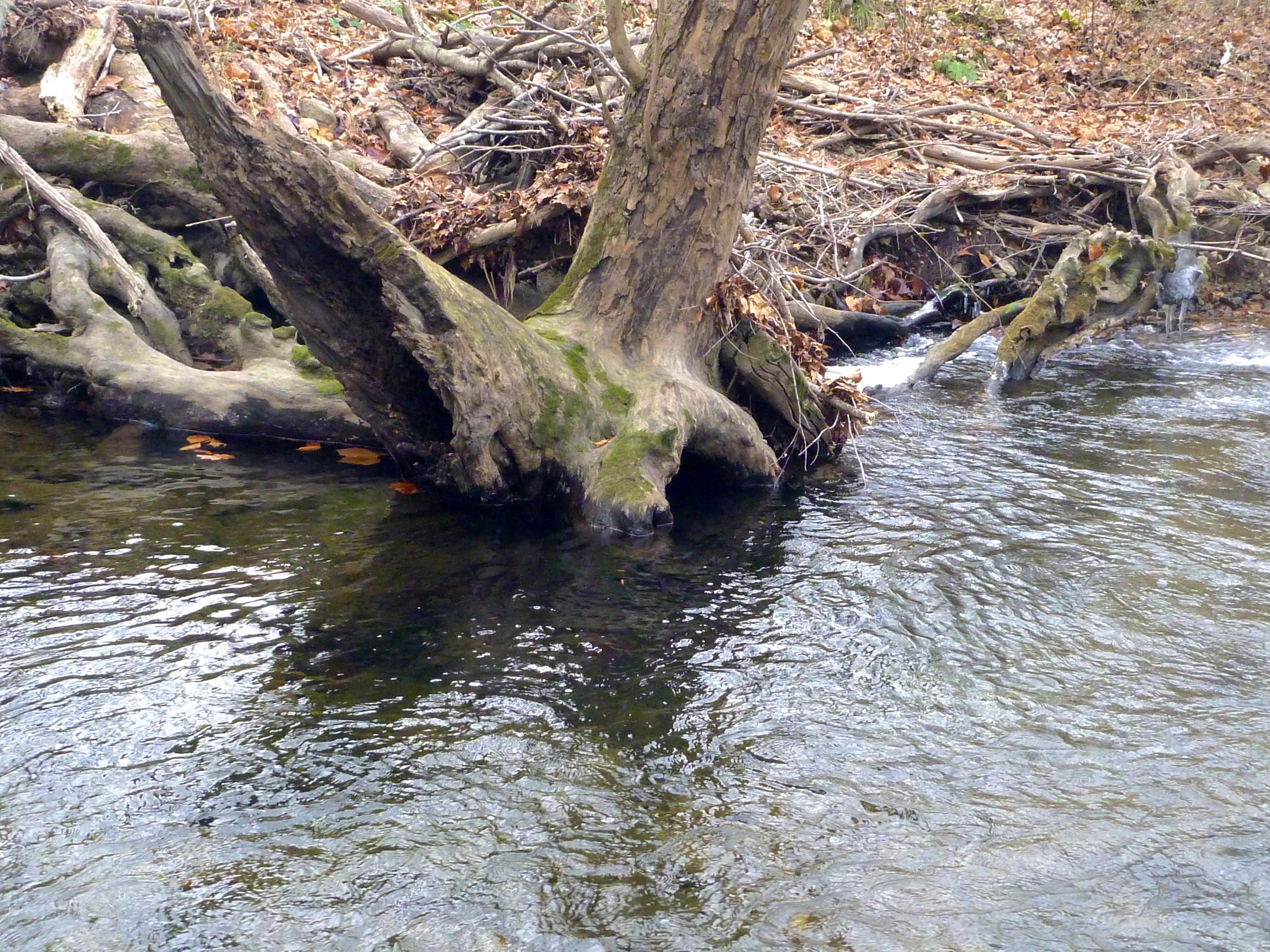 Deep pool around roots