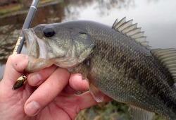 Angler holding bass