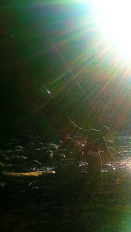 Backlit angler landing fish. The light makes the line shine.