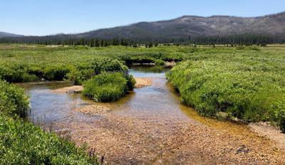 Creek in the Big Meadow