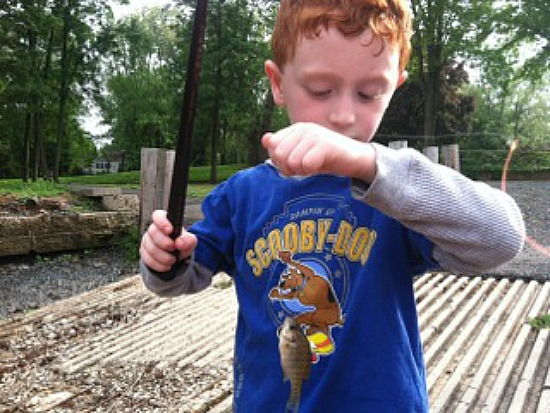 bluegill sunfish graham cracker