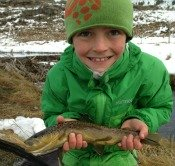 brown trout - Noah S