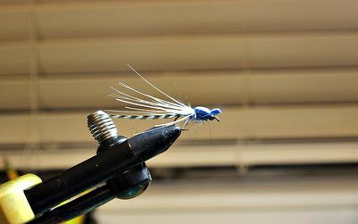 Simple Blue Damselfly
