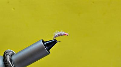 Utah Killer Bug