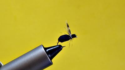 Black Foam Beetle