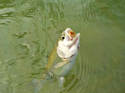 Tenkara Increases Angling Opportunities