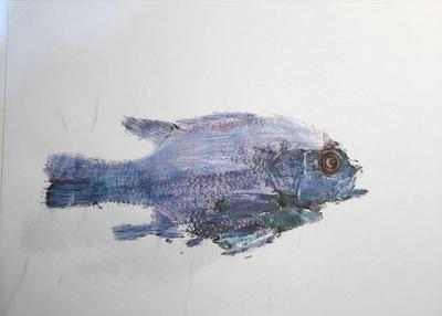 Rock Bass ink and colored pencil