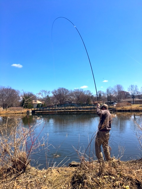 Bend in rod with carp on the line