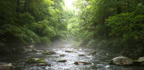 Stream in deep shade and mist.